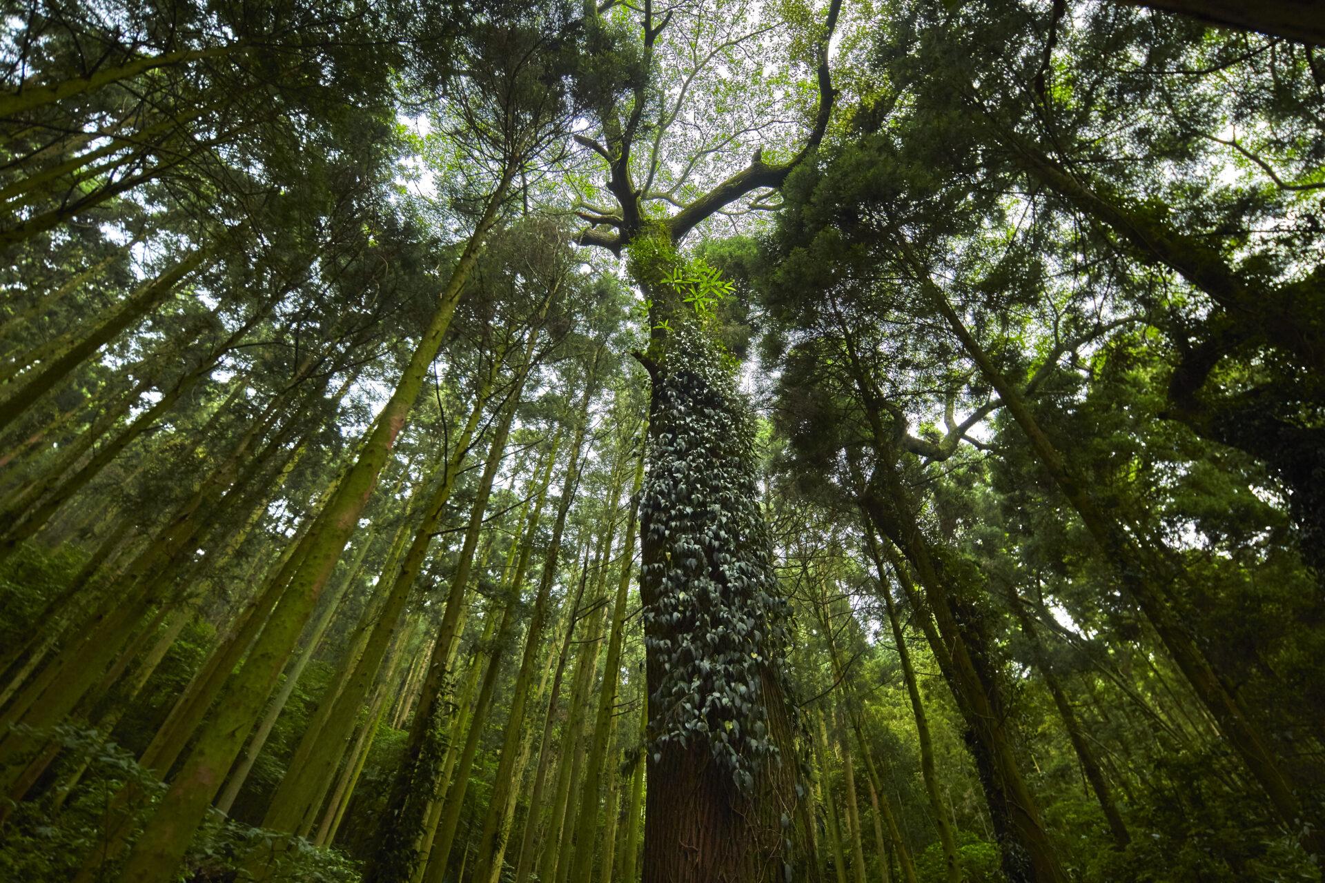 家具を作る私たちが、木と森を守るために考えていること。
